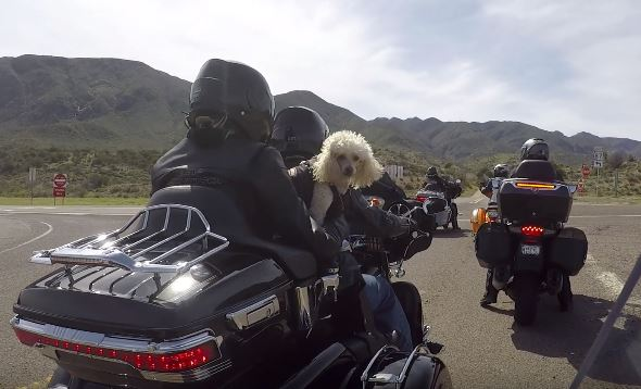 Roosevelt Lake Loop Motorcycle Ride
